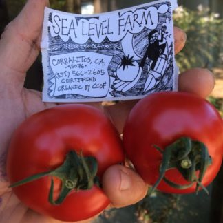 sea level tomato